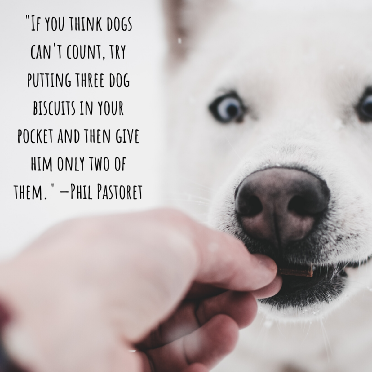 """If you think dogs can't count, try putting three dog biscuits in your pocket and then give him only two of them."" —Phil Pastoret"