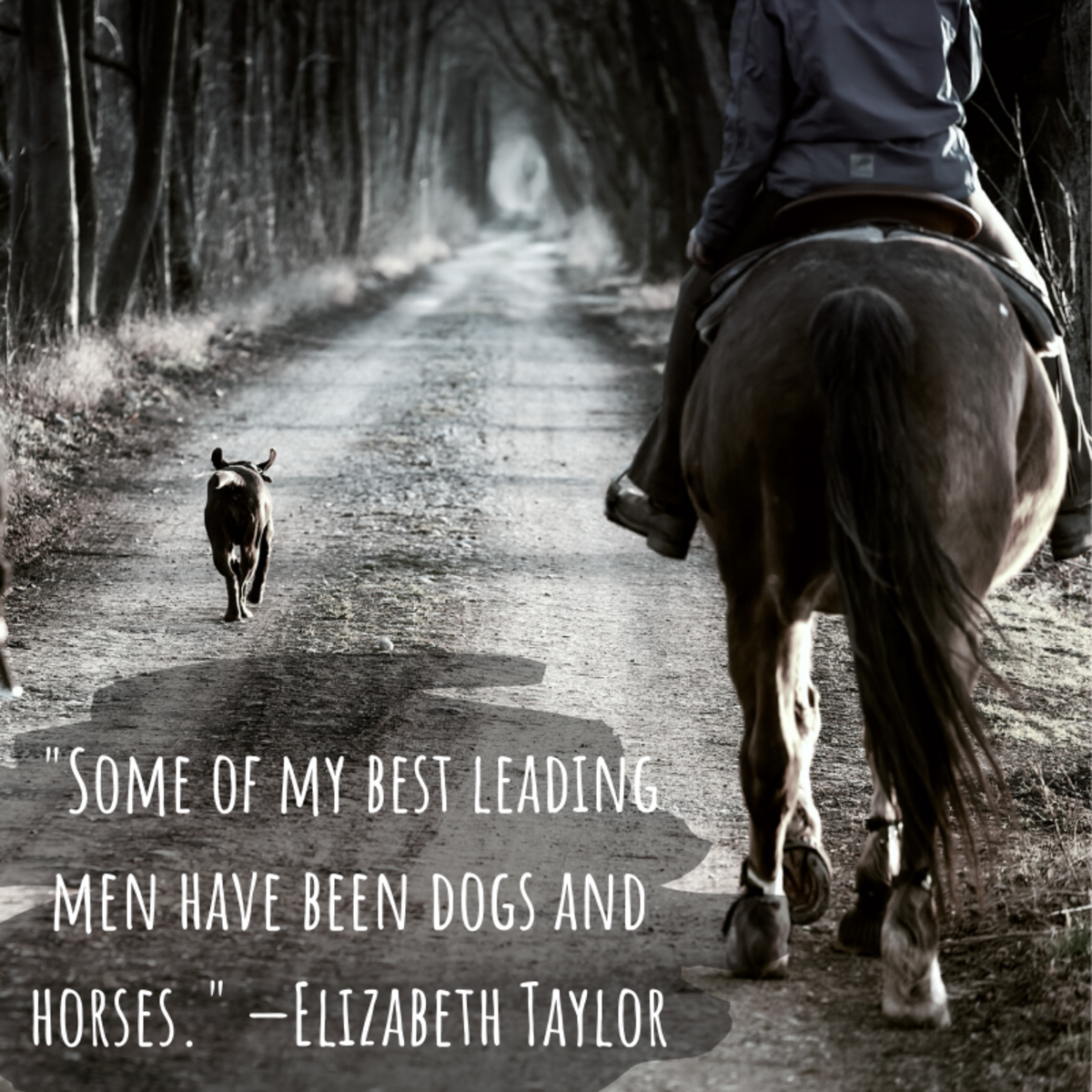"""Some of my best leading men have been dogs and horses."" —Elizabeth Taylor"