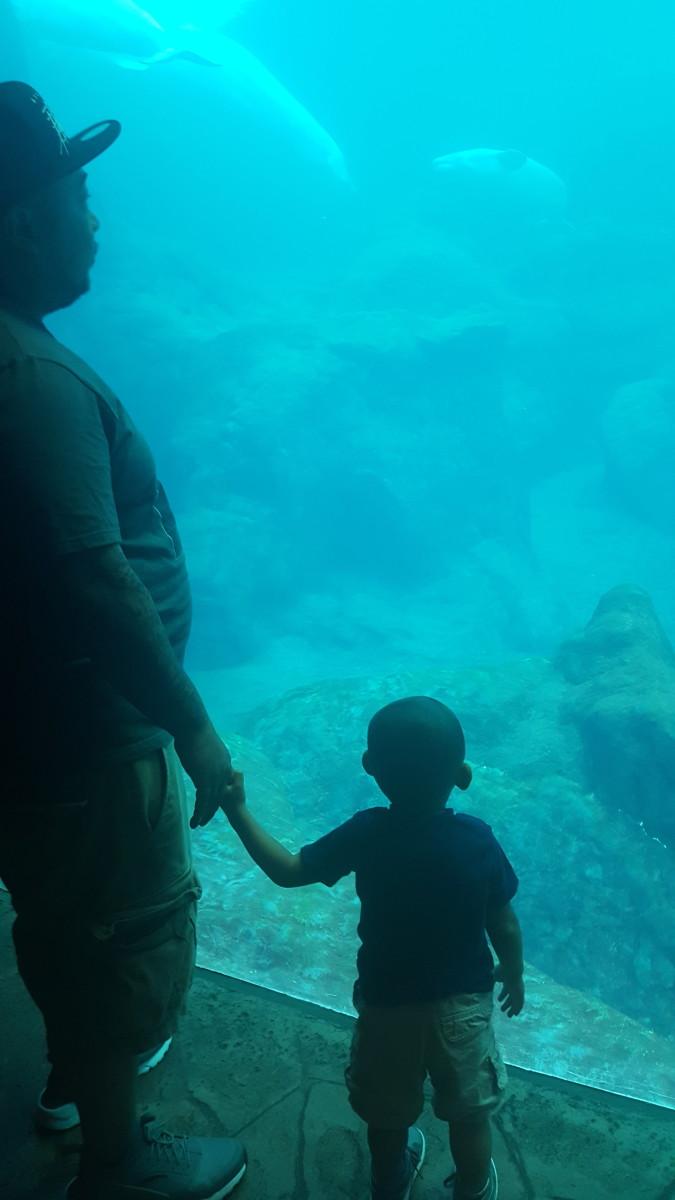 Georgia Aquarium; Atlanta, GA
