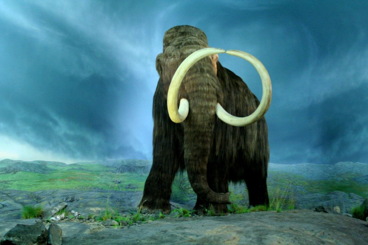 Woolly Mammoth/Photo by: Tracy O./Source: Wikipedia Commons