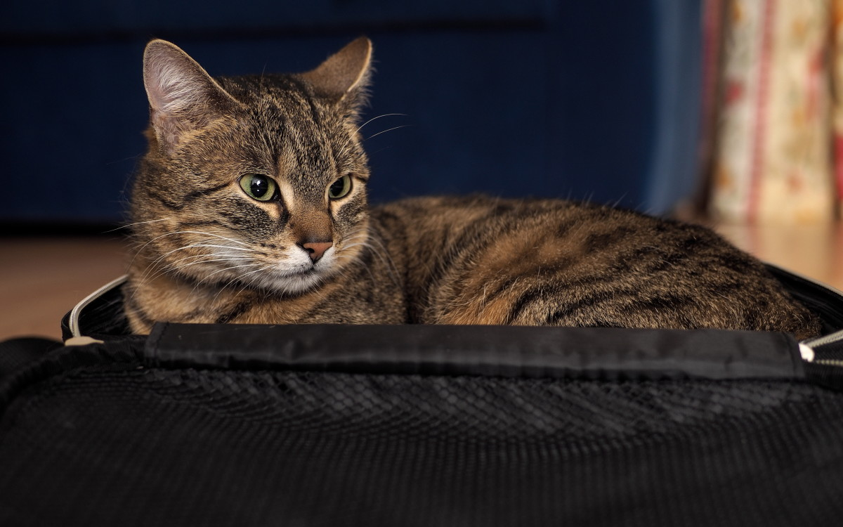 Miss me, but just don't pee in the suitcase. Please?