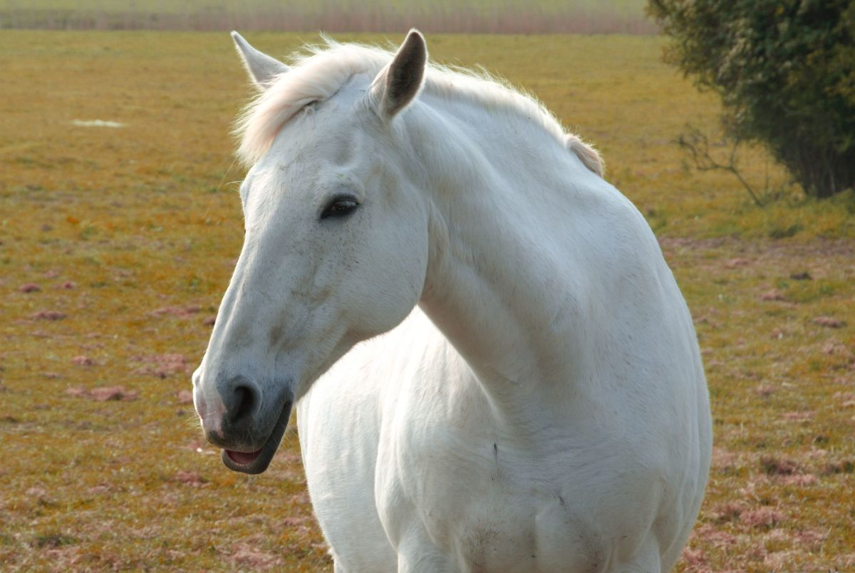 """""""The way to heaven is on horseback."""" - Unknown"""