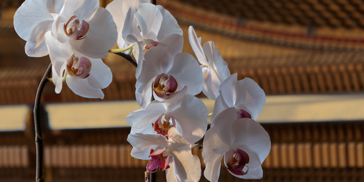 Orchids have a subtle beauty.
