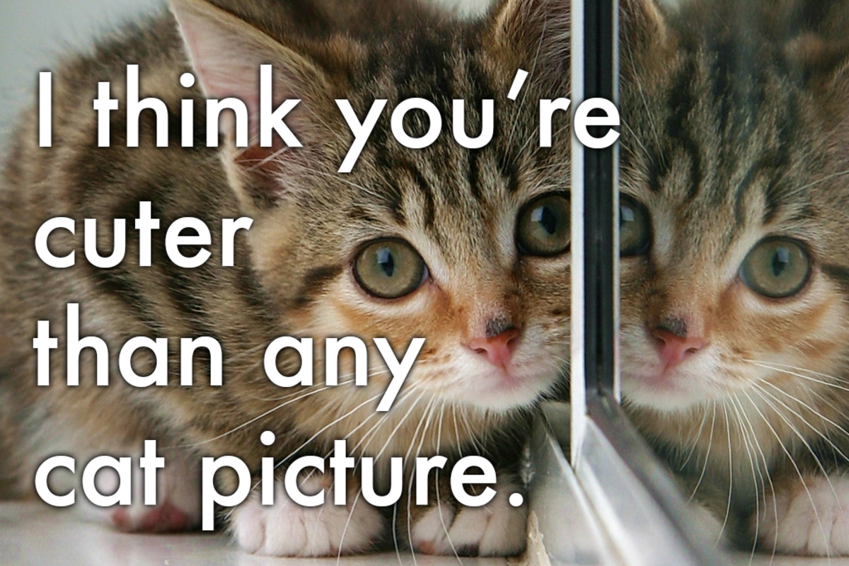 I think you're cuter than any cat picture.