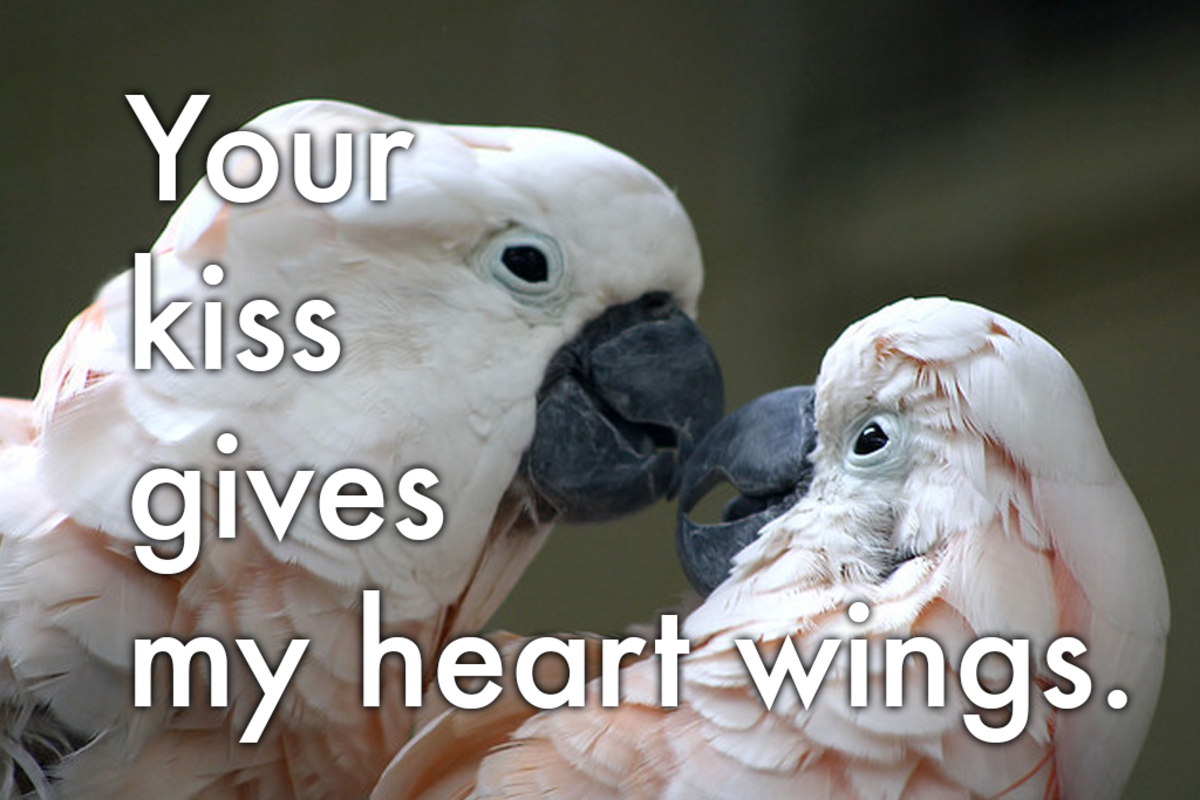 A love message for birds of a feather: 'Your kiss gives my heart wings.'