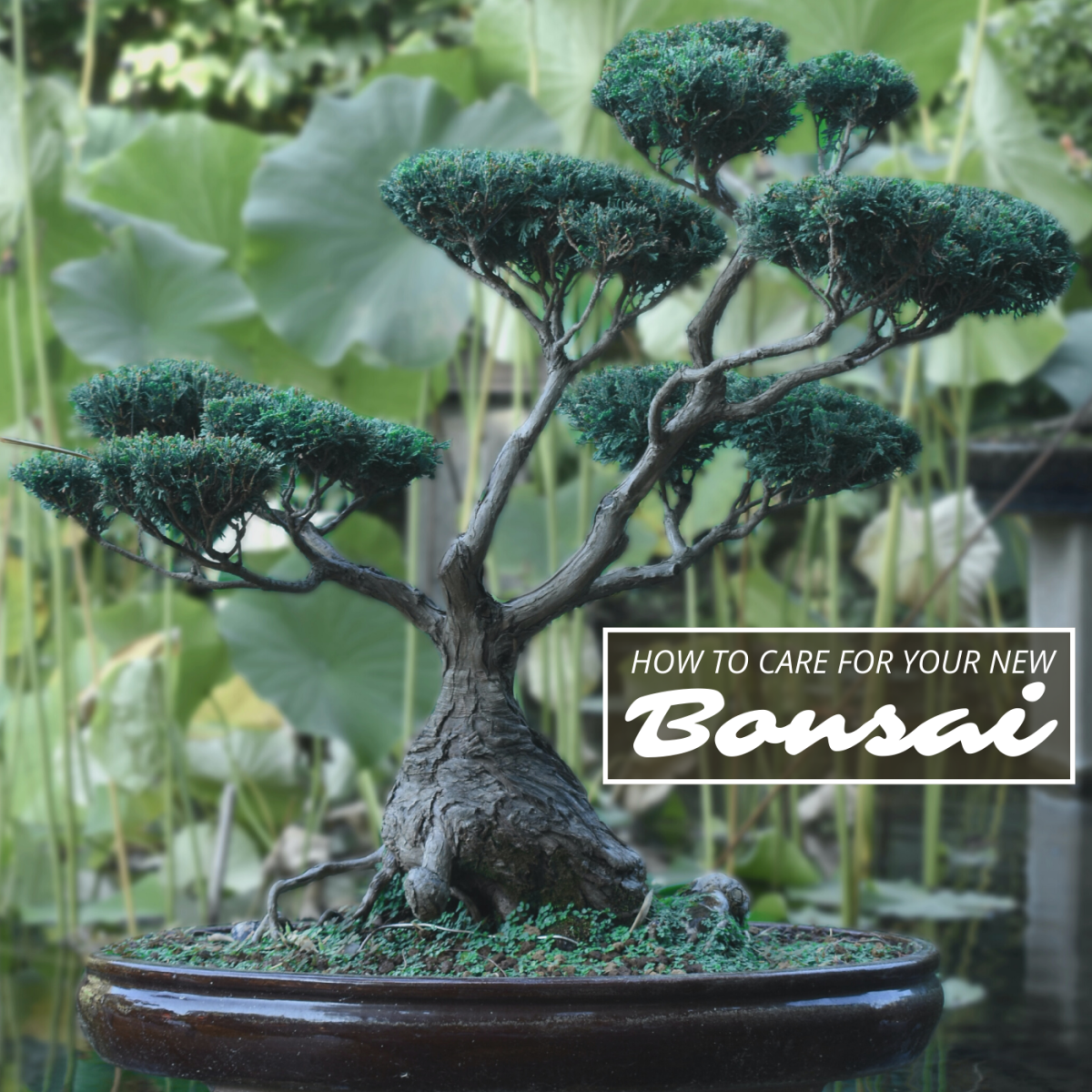 Bonsai trees grow slowly and require a lot of care, but proper maintenance can yield breathtaking results.