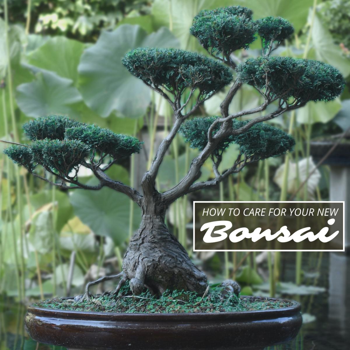 How to Take Care of a Bonsai Tree