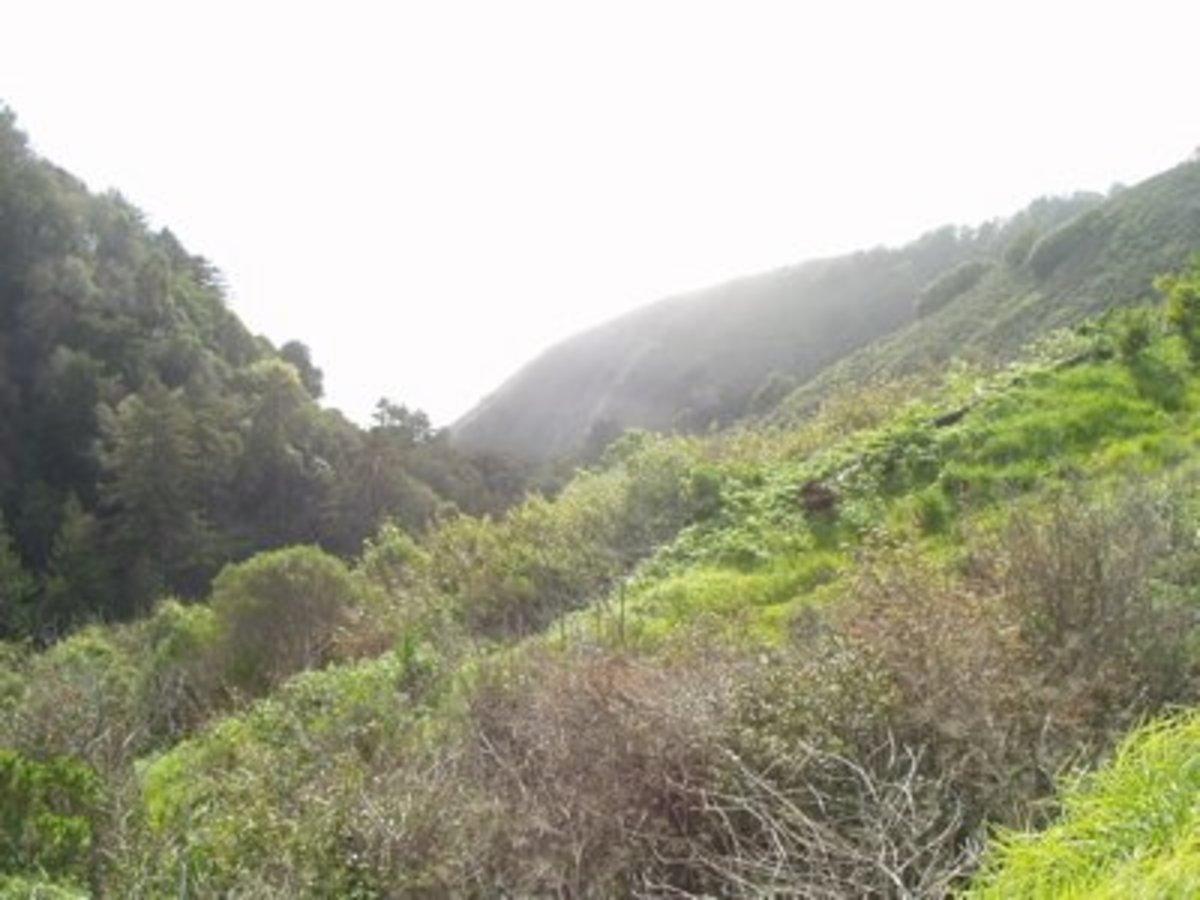 California hills / E. A. Wright 2005