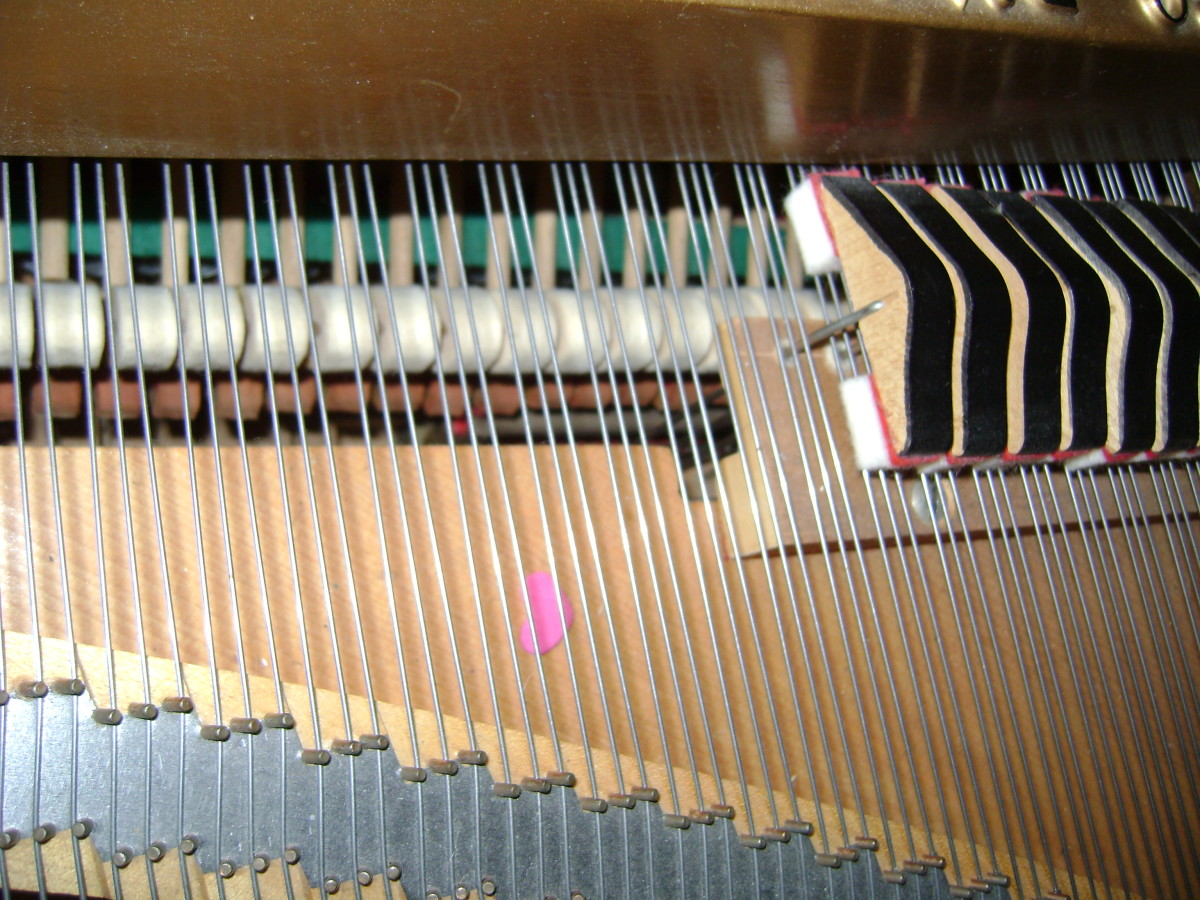 The sounding board on my grand piano. These are the strings that vibrate when you sing their resonant frequency.