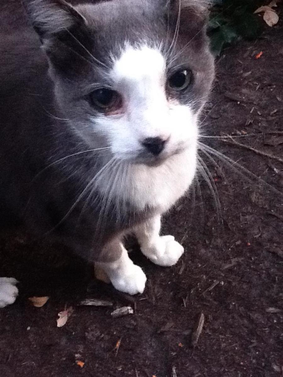 The Colonel was a gentle warrior, a cat who truly had a survivor spirit.