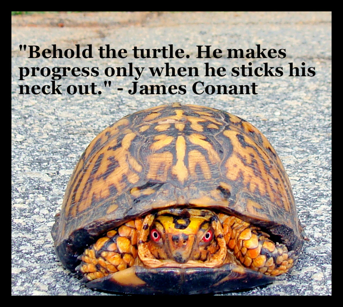 """Behold the turtle.  He makes progress only when he sticks his neck out."" - James Conant, former president of Harvard University"