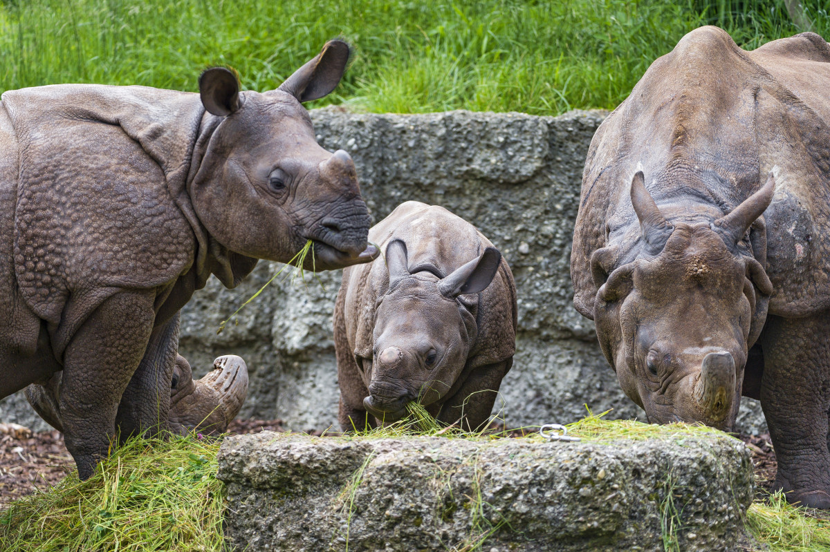 """""""Words can't hurt you.  You've got a tough hide, young man.""""  A mother rhinoceros offers her baby words of encouragement."""