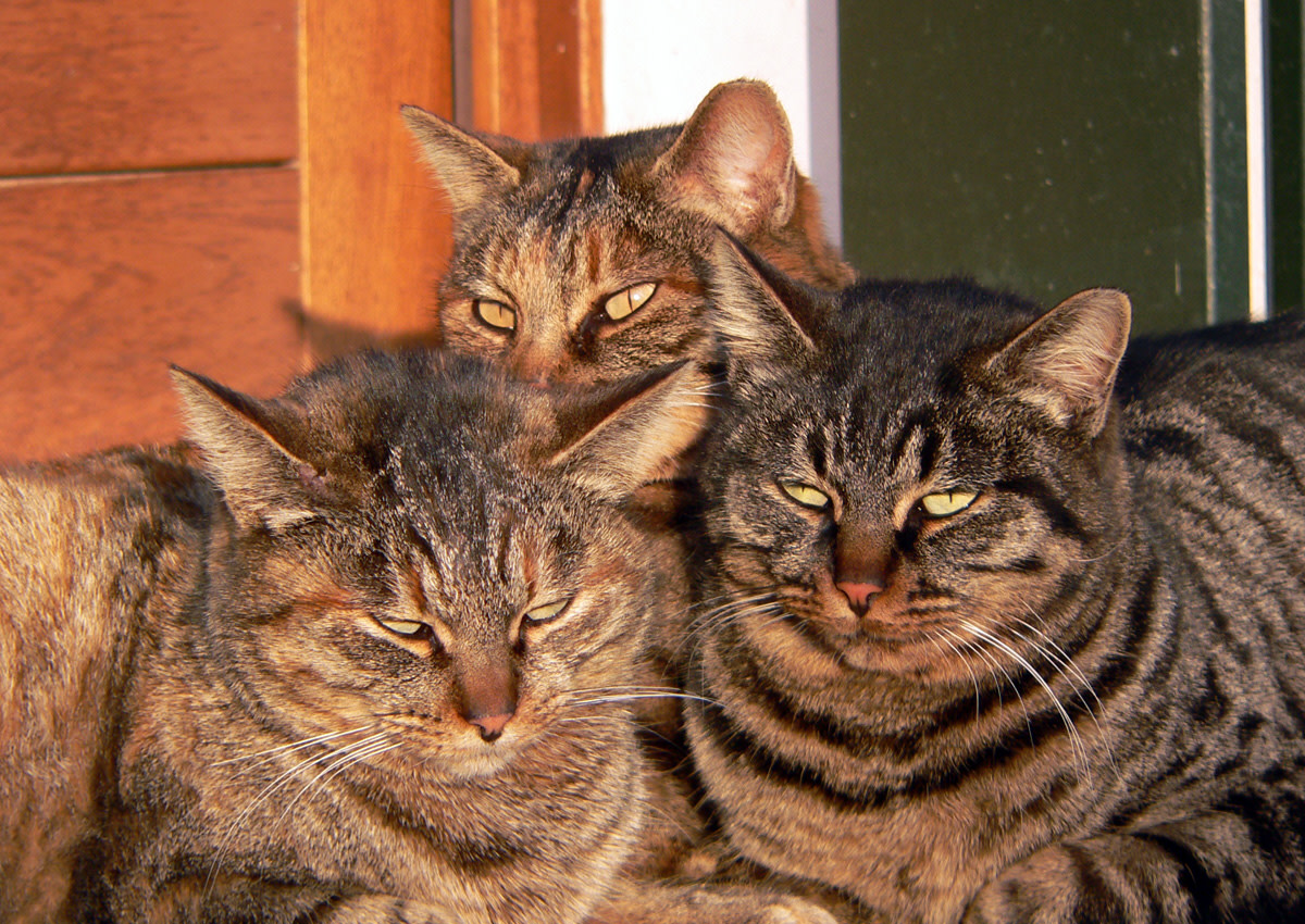 The gathering of the gossip girls.  Mama Cat sticks close to her two dashing daughters.