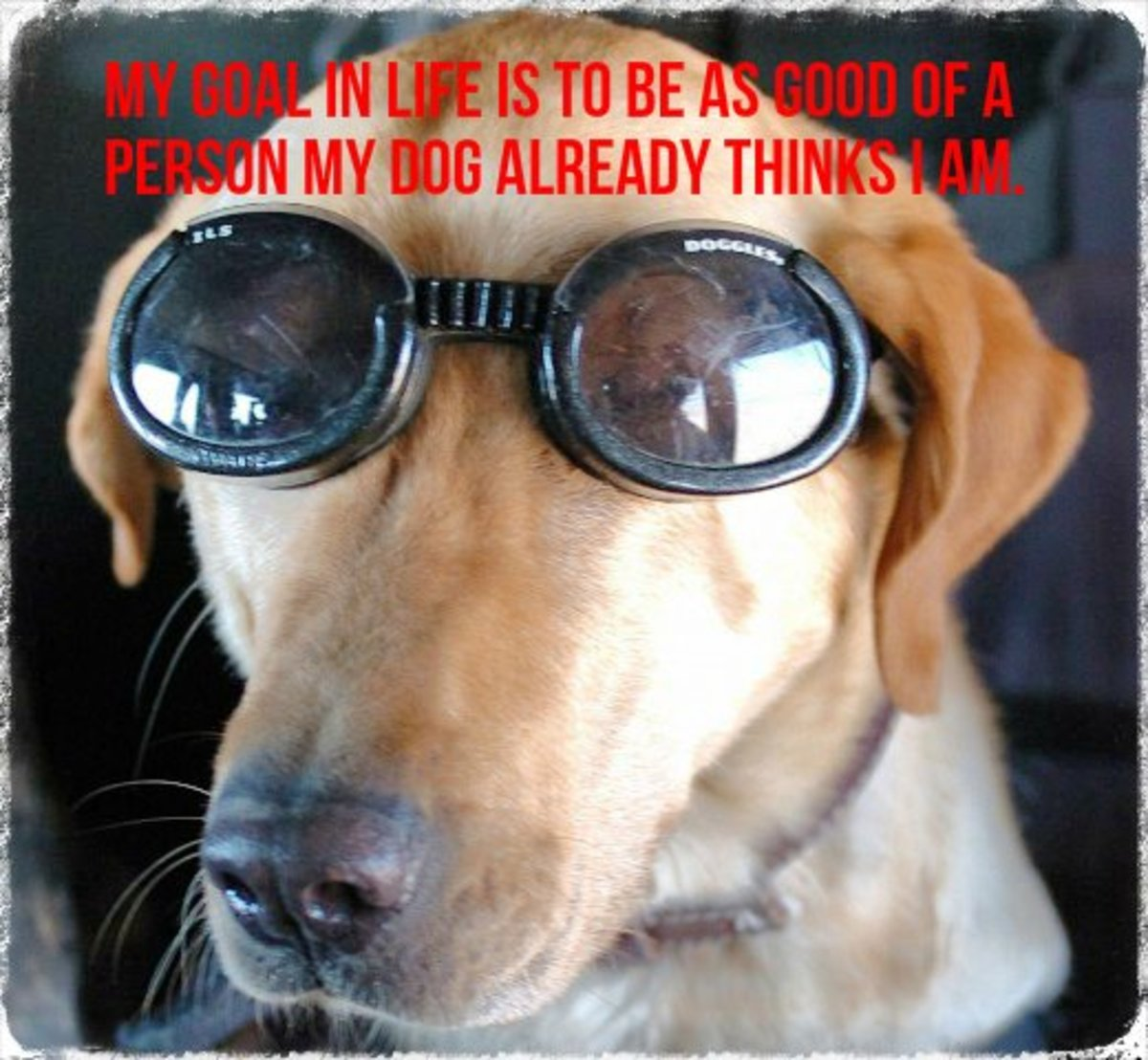 """My goal is to be as good of a person as my dog already thinks I am."" - Author Unknown"