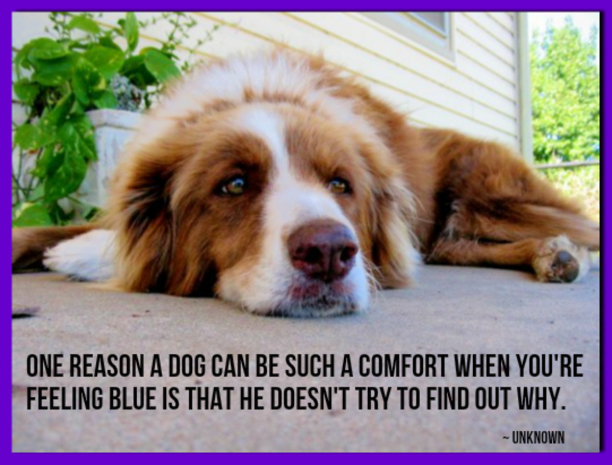 """One reason a dog can be such a comfort when you're feeling blue is that he doesn't try to find out why."" -Author Unknown"