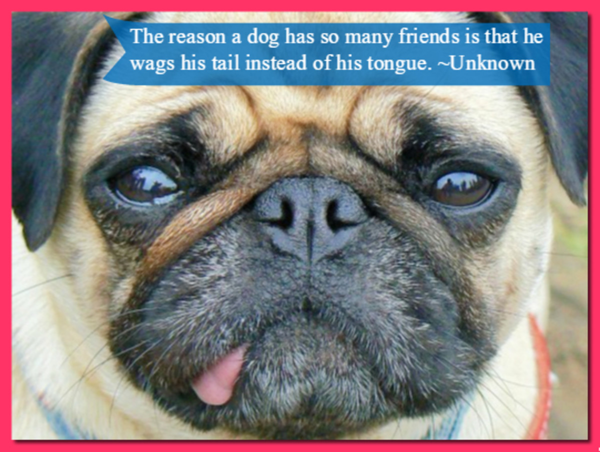 """The reason a dog has so many friends is that he wags his tail instead of his tongue."" -Unknown"