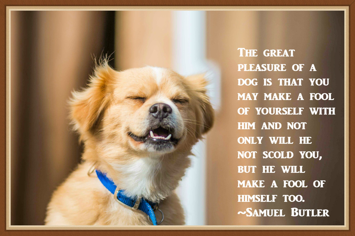 """The pleasure of a dog is that you make a fool of yourself with him and not only will he not scold you, but he will make a fool of himself too."" - Samuel Butler"
