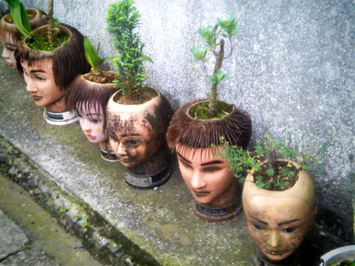 What else would you plant in a head-shaped planter?