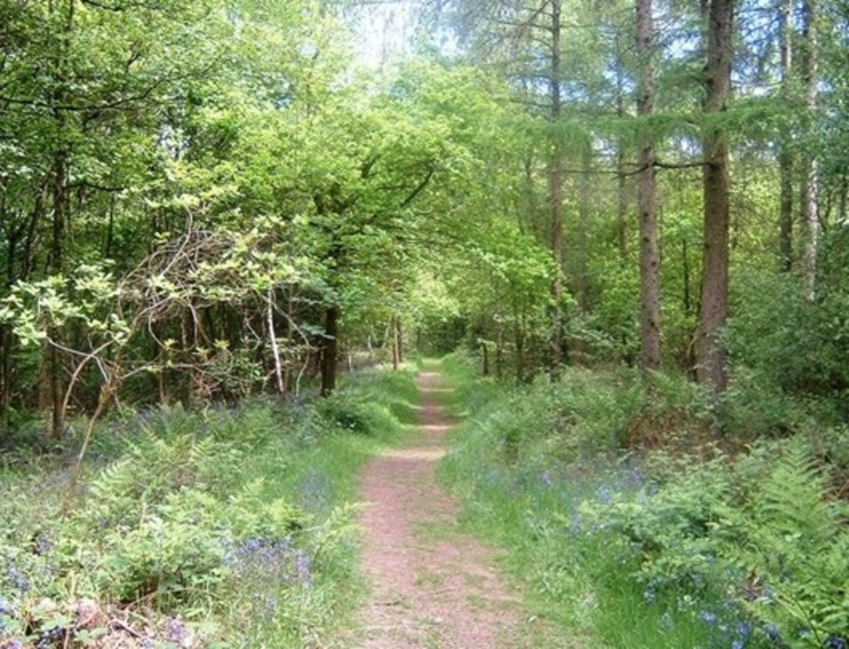 Into the Uffmoor Woods!