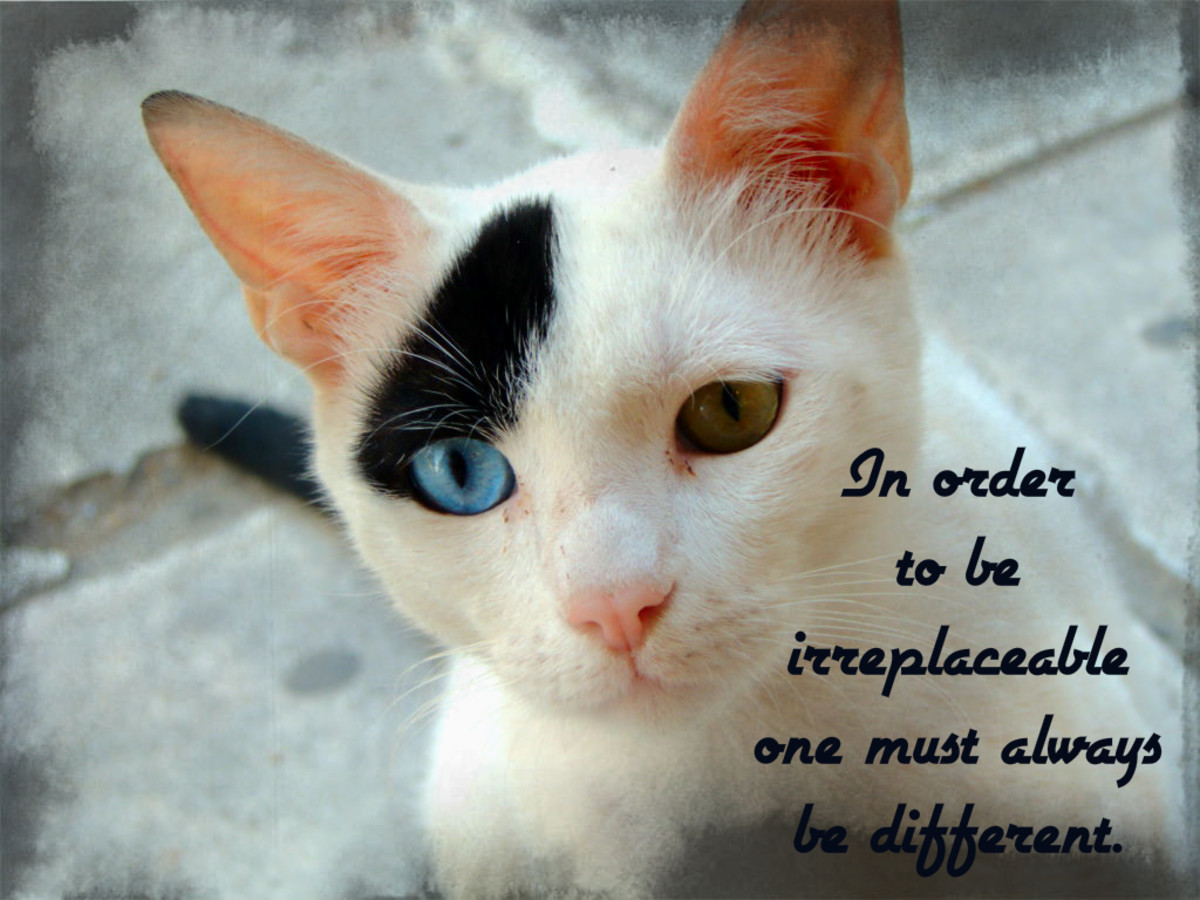 """In order to be irreplaceable one must always be different."" - Coco Chanel, French fashion designer"