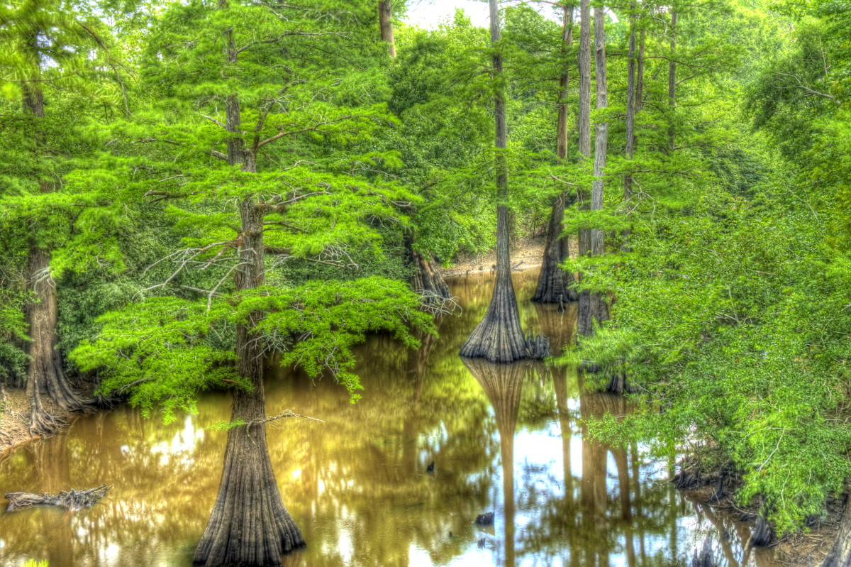 """Bayous can be saltwater, freshwater, or a combination (called """"brackish water."""")  Unfortunately, Louisiana has lost about 1,900 square miles (4,900 sq km) since the 1930s."""