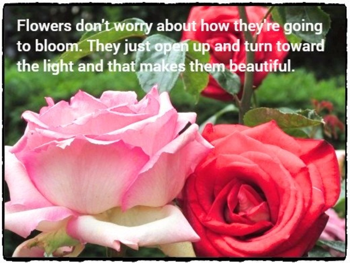 """Flowers don't worry about about how they're going to bloom. They just open up and turn toward the light and that makes them beautiful."" - Jim Carrey, American comedian"