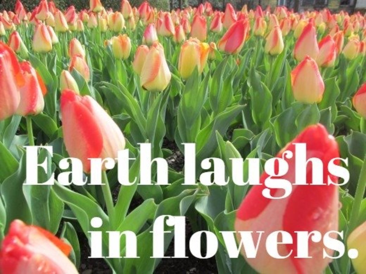 """Earth laughs in flowers."" - Ralph Waldo Emerson, American poet"