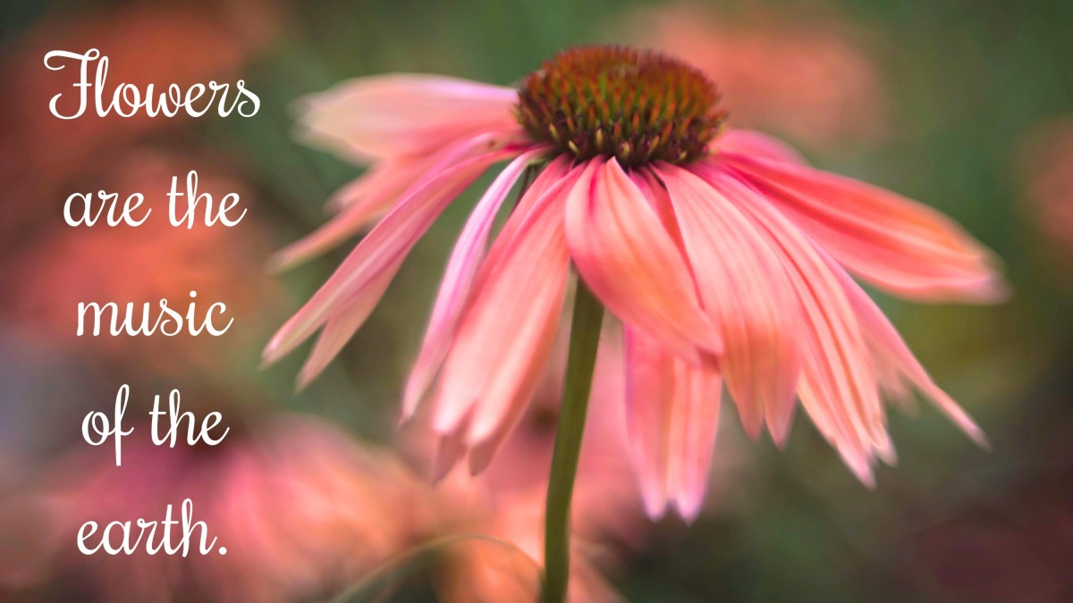 """""""Flowers are the music of the earth."""" - Marty Rubin, American writer"""