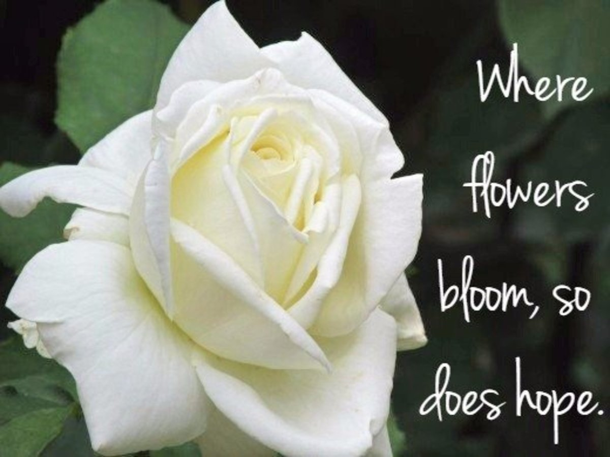 """Where flowers bloom, so does hope."" - Lady Bird Johnson, former First Lady of the United States."