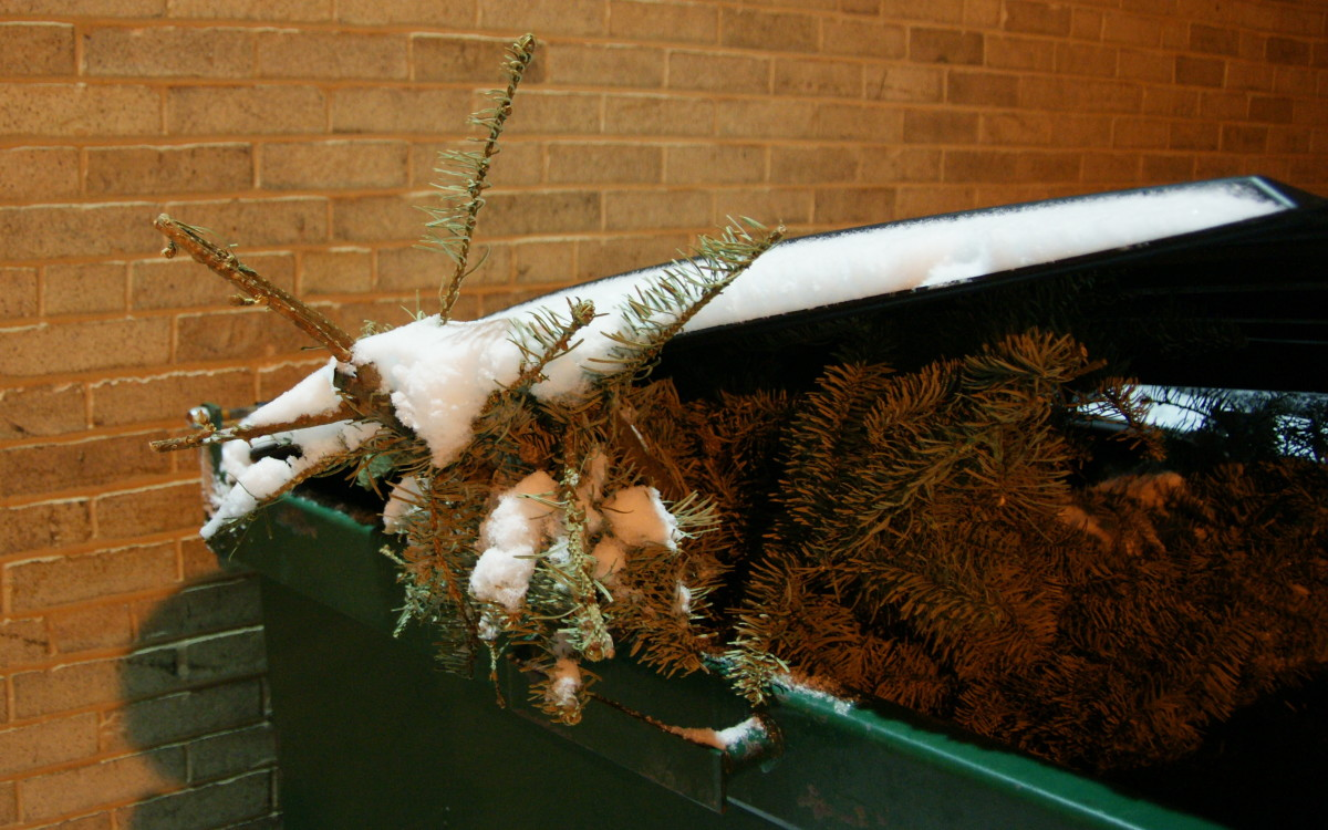 This Grinch tossed his tree in the trash!  Fortunately, however, as many as 93% of live Christmas trees are recycled through a community recycling program.  In the United States, 35-40 million natural Christmas trees are sold each year.