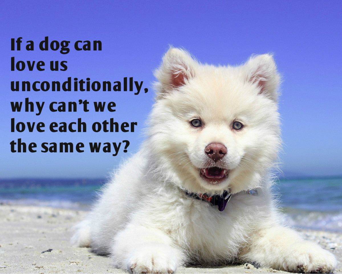 """If a dog can love us unconditionally, why can't we love each other the same way?"" - Carol McKibben, American author"