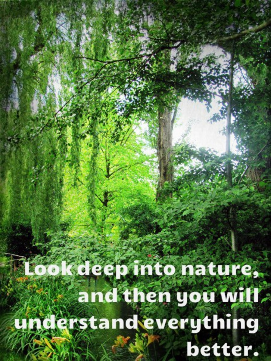 """Look deep into nature and then you will understand everything better."" - Albert Einstein, German-American physicist"