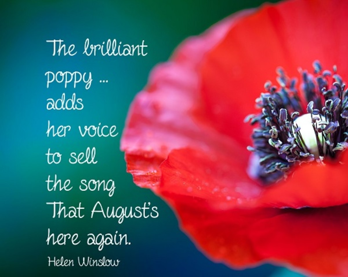 The poppy is the other official flower of August.  It is also the symbol of remembrance for the end of World War I and a symbol of honor for those who served.