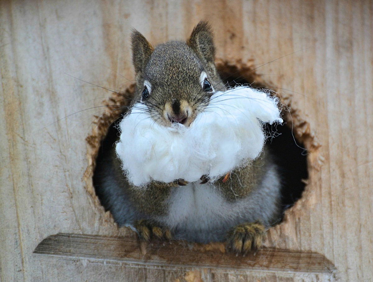 May you get everything you wish for this Christmas!  (This squirrel is enjoying bamboo cotton bedding.)