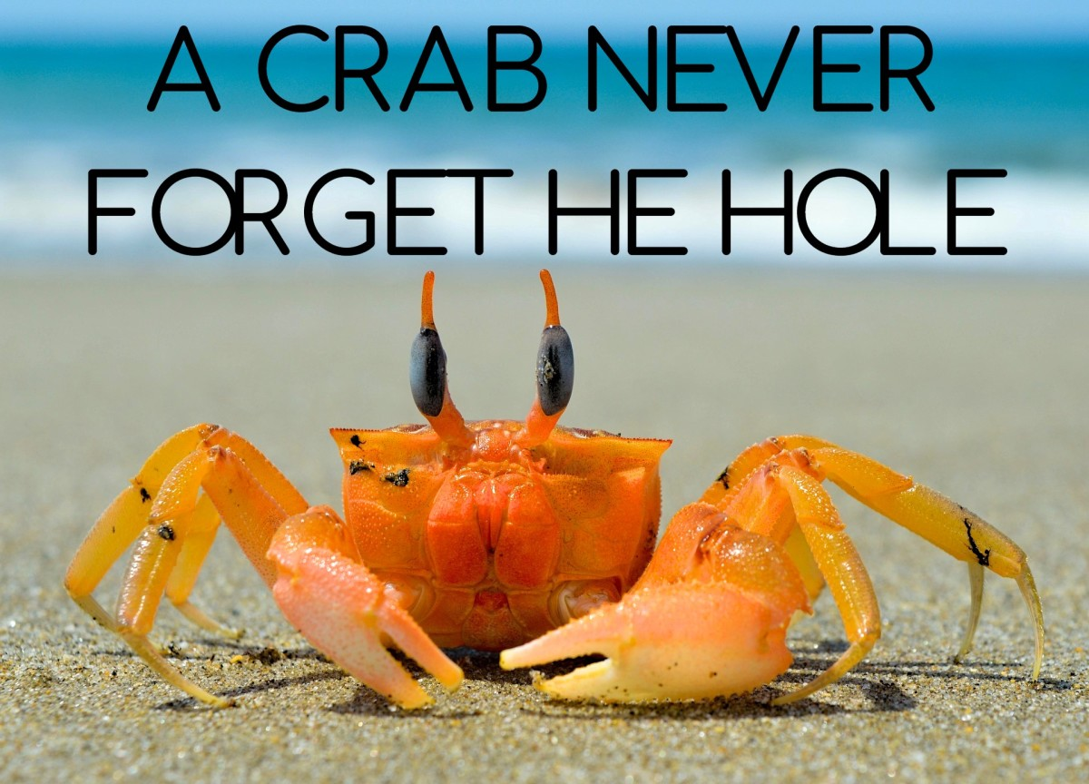 """A crab never forget he hole"" - Caribbean saying (There's no place like home.)"