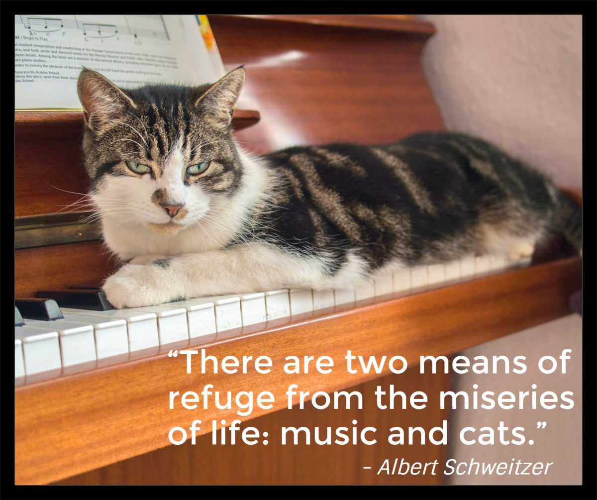 """""""There are two means of refuge from the miseries of life: music and cats.""""- Albert Schweitzer, German-French medical missionary and philosopher"""