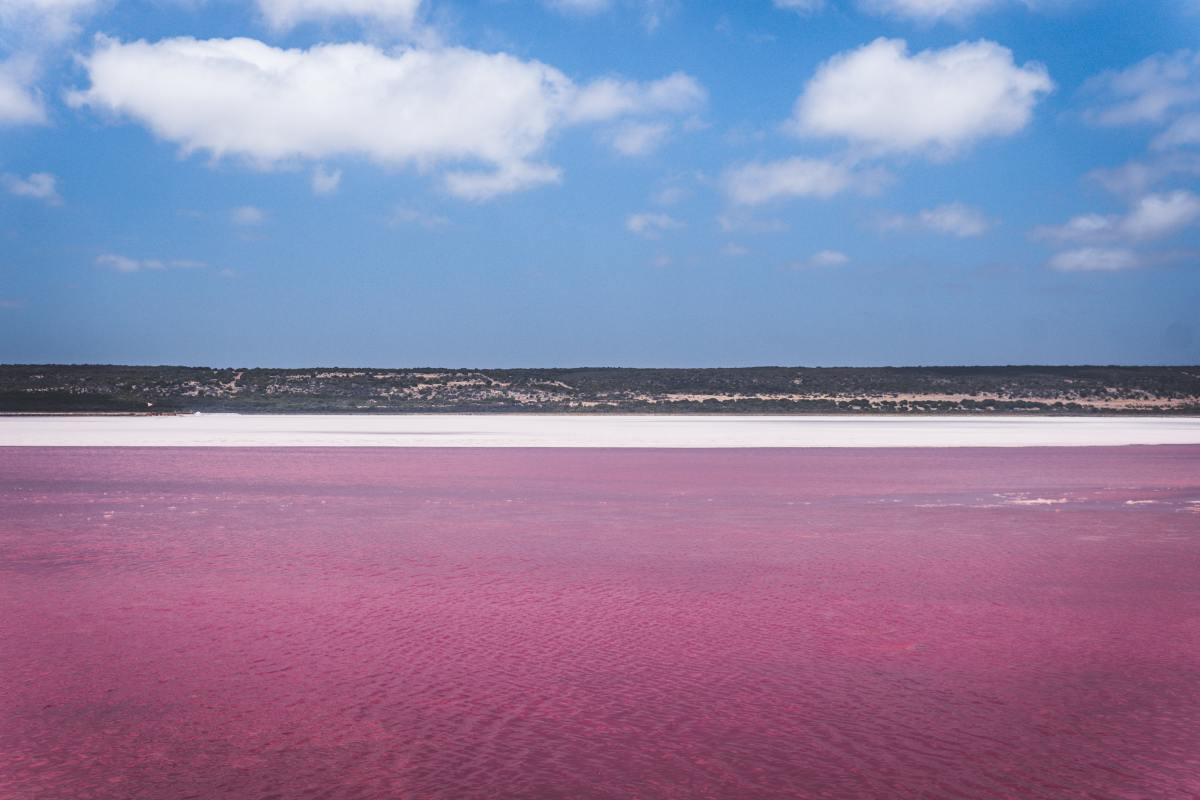 With high salt content similar to levels of the Dead Sea, Pink Lake in Australia gets its unusual color from Salinibacter ruber bacteria. Its shade of pink varies according to the amount of rainfall.