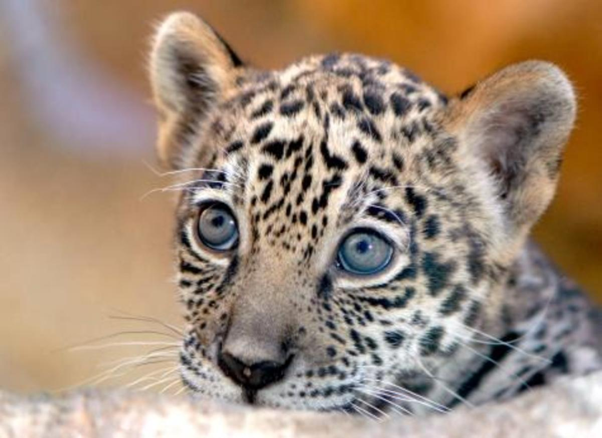 Just one of the many wide-eyed baby animals you'll see at the Palm Beach zoo!