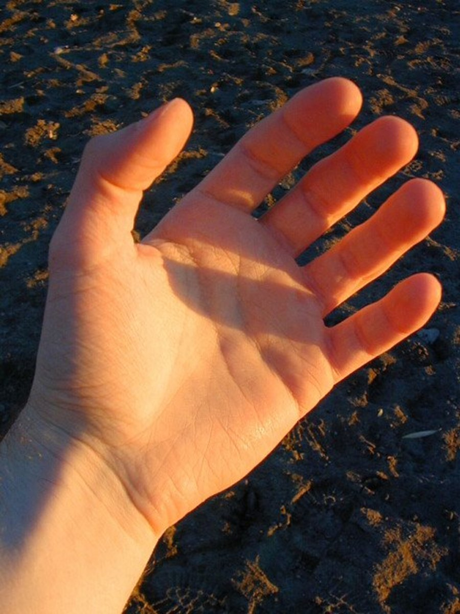 Palm of Hand
