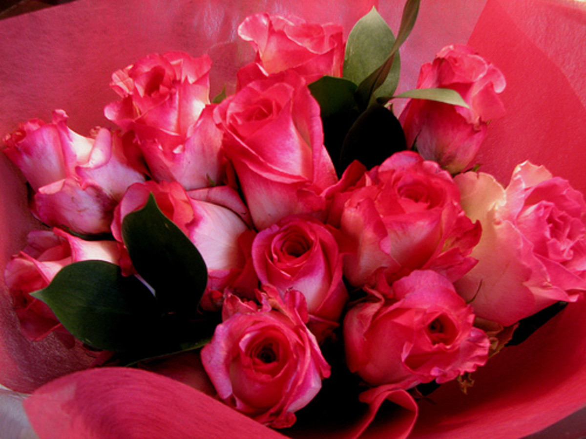 Older men know a dozen pink roses are the perfect romantic gesture