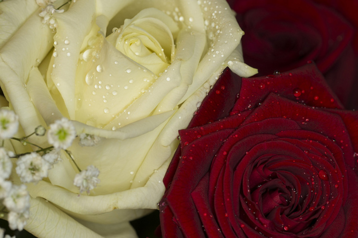Combine the colors red and white to celebrate your first Valentine's Day as a married couple, or for bridal bouquets. The combination represents unity!