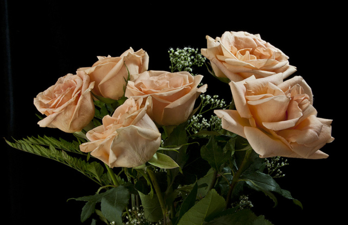 "Peach roses say ""Let's get together."" Or, in more modern parlance, ""Let's hook up!"" They are a variation on the orange color, representing desire."