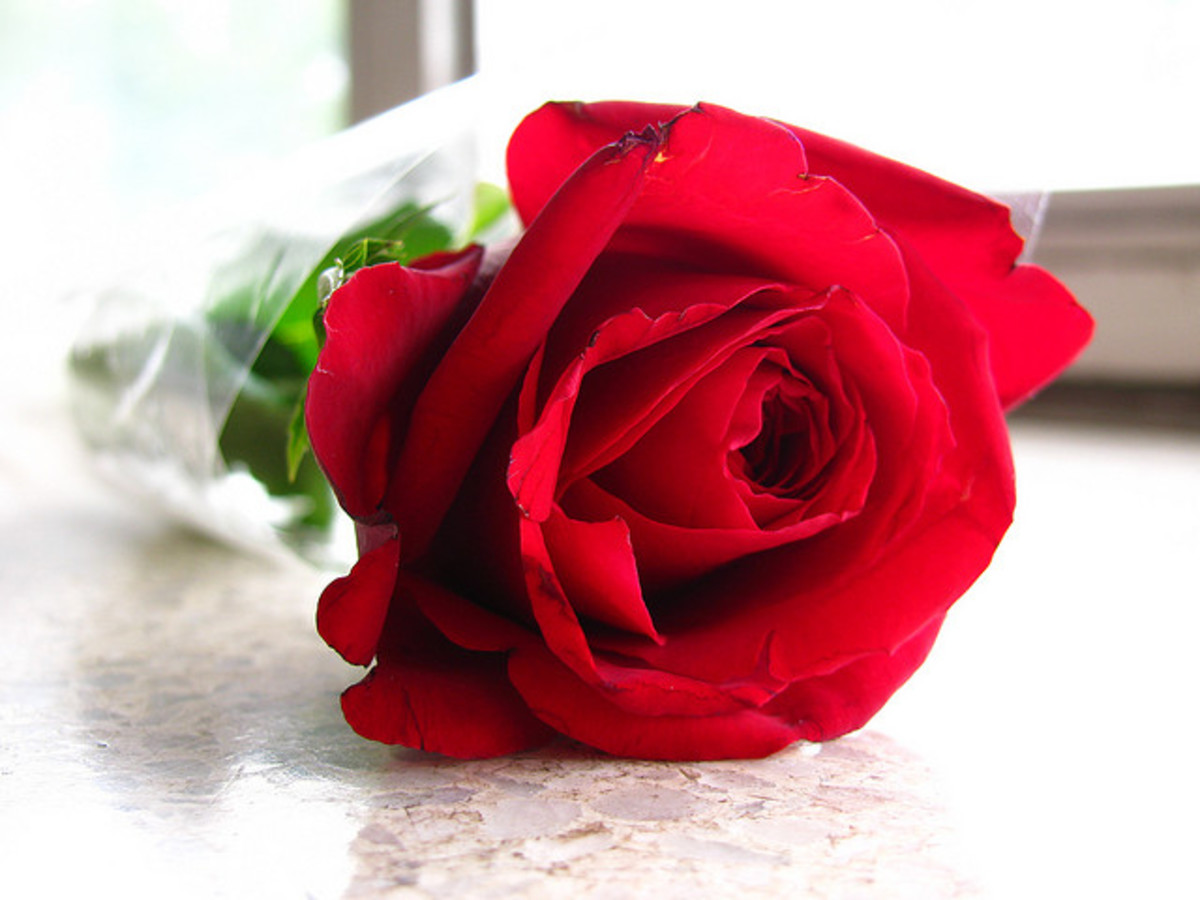 "A single red rose represents devotion to a passionate relationship. It could say to your partner: ""You're the only one for me. Be mine."""