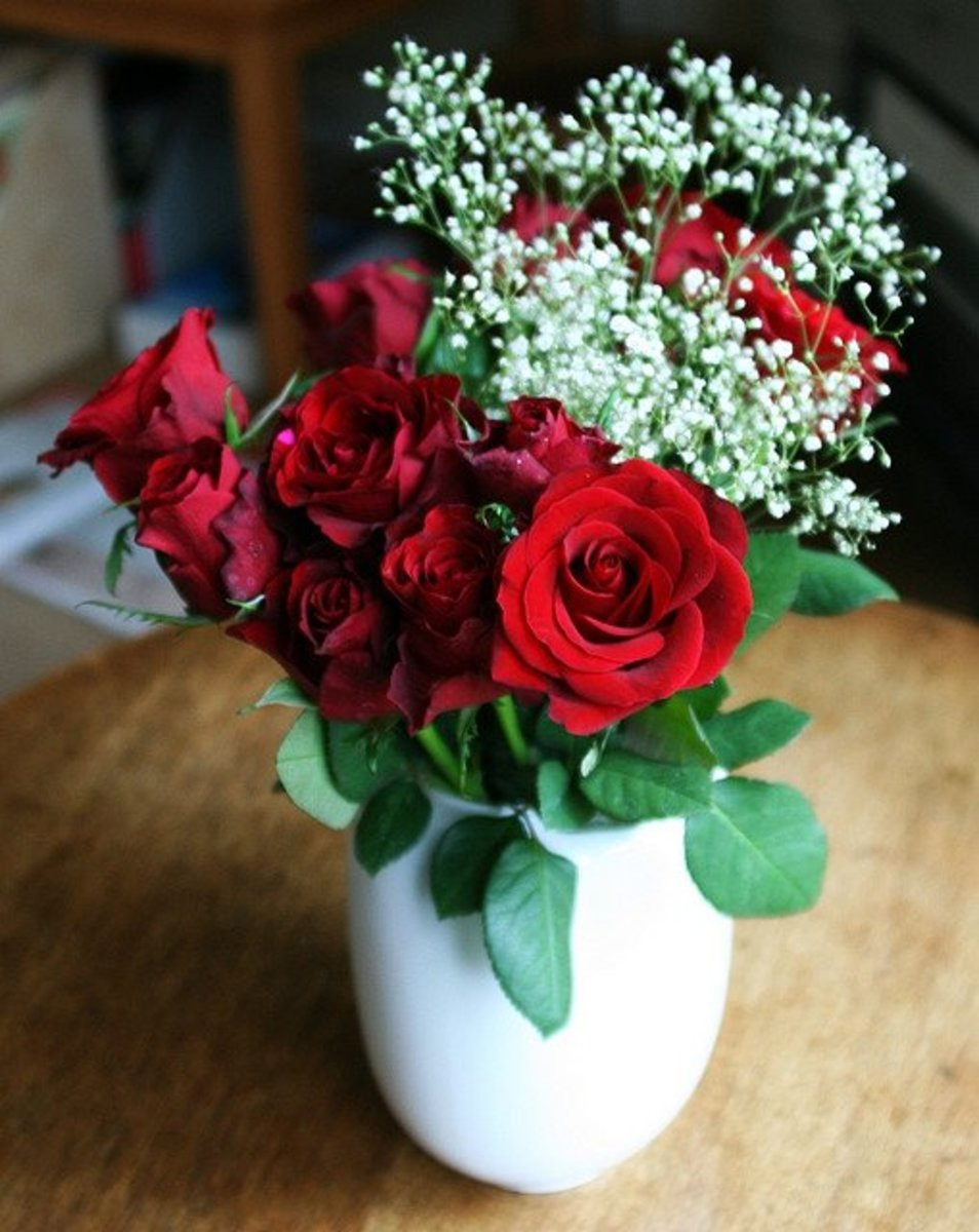 Red roses are perfect for Valentine's Day!