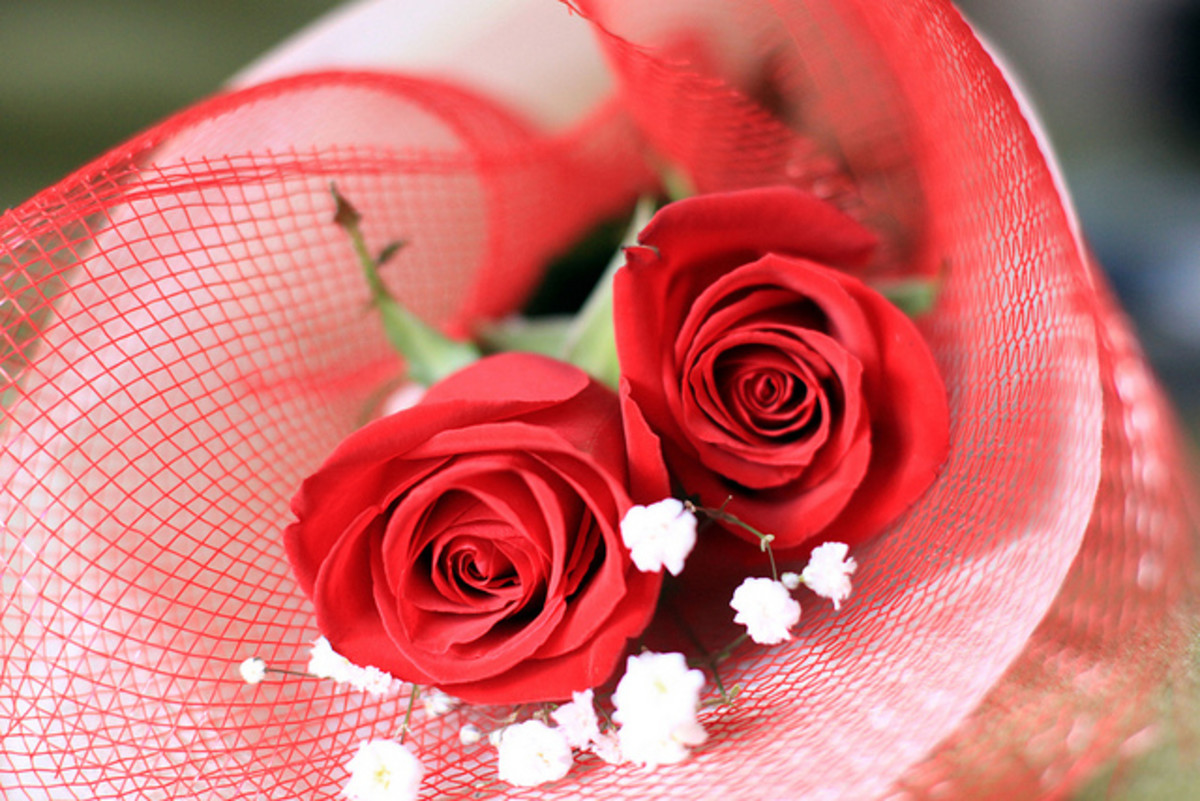 Two red roses entwined with one another is a way to ask your lover if she would like to marry you. Give two roses this Valentine's Day if you're planning on proposing. If not, opt for more roses or a single rose instead of two roses!