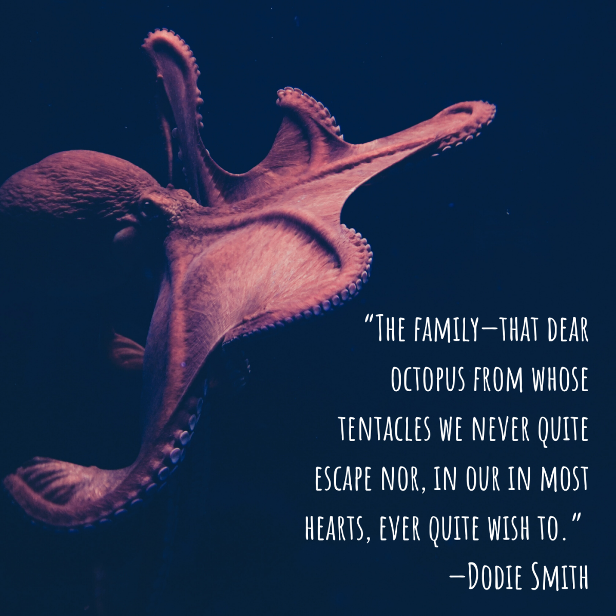 """""""The family—that dear octopus from whose tentacles we never quite escape nor, in our inmost hearts, ever quite wish to."""" —Dodie Smith"""