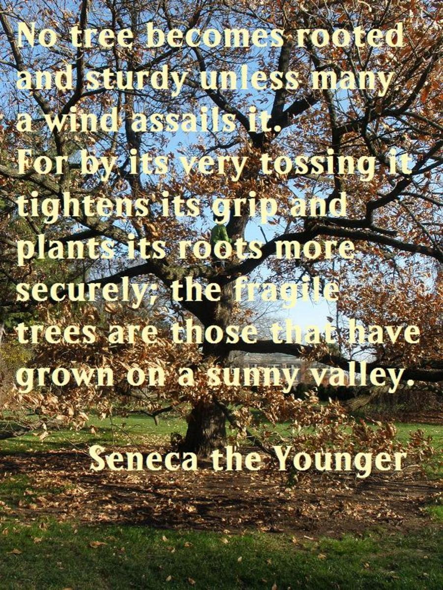 """""""No tree becomes rooted and sturdy unless many a wind assails it. For by its very tossing it tightens its grip and plants its roots more securely; the fragile trees are those that have grown in a sunny valley."""" —Seneca the Younger"""