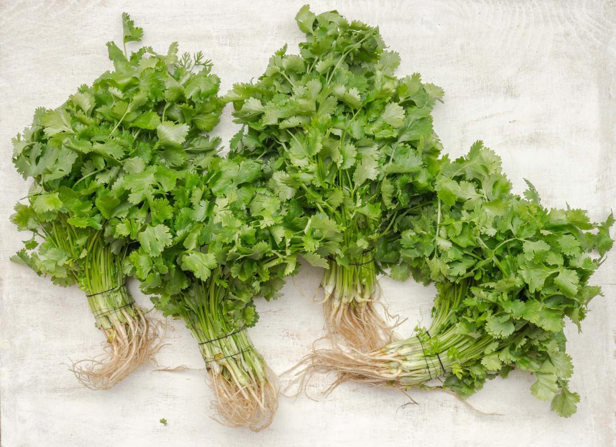 Did you know cilantro is an aphrodisiac?