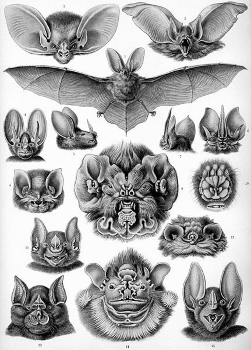 Ernst Haeckel brought bats to homes with this artist's plate in 1899.