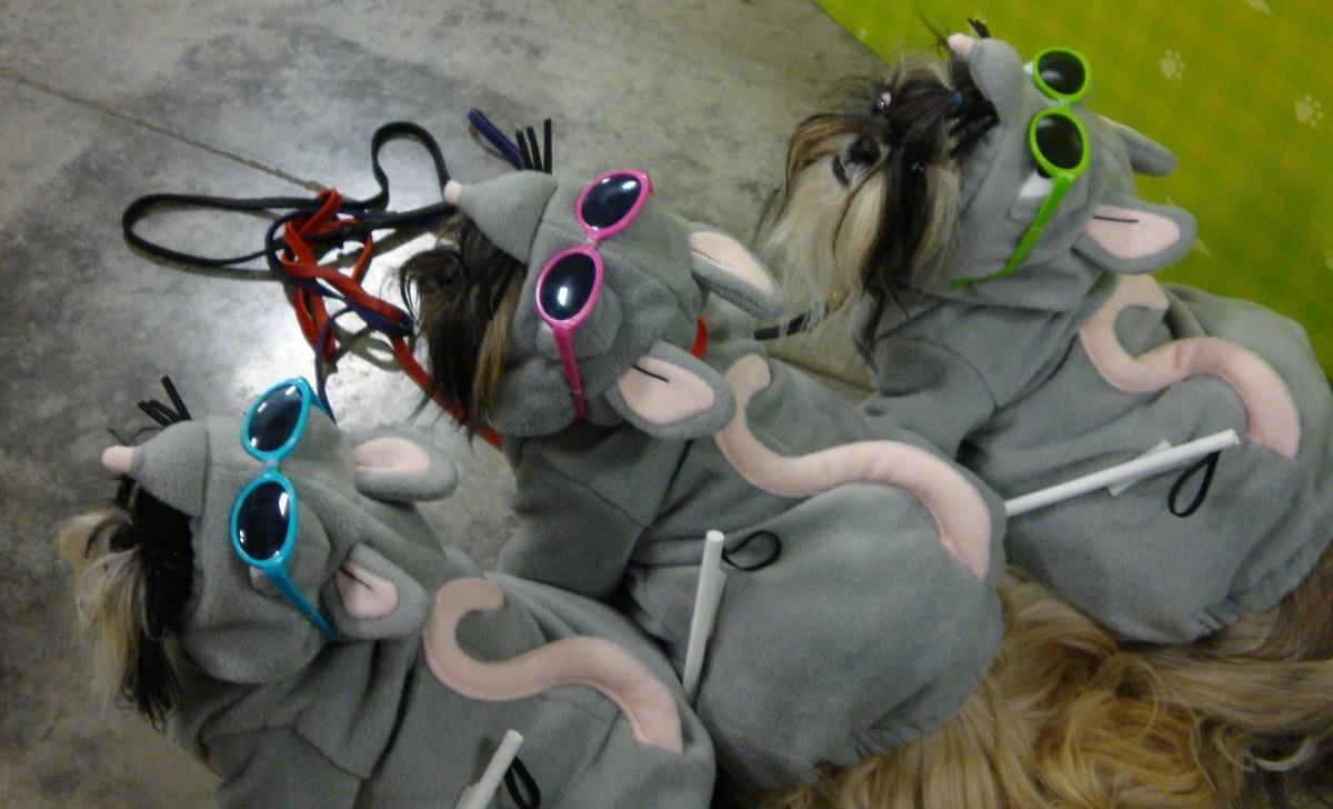 "Dressed up as ""Three Blind Mice"""